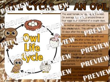 Owl Life Cycle Factball and Comprehension Sheet