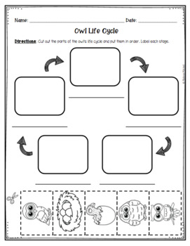 Owl Life Cycle Unit - Informational Text and Activity Sheets