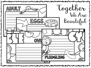 Owl Life Cycle Activity: Collaborative Research Poster