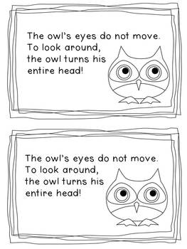 Owl Literacy Unit