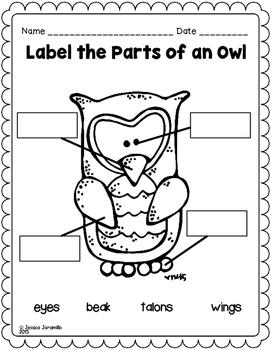 Owl Mini Science Unit