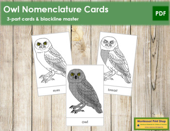 Owl Nomenclature Cards