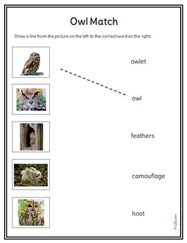 Owl NonFiction Packet for Autism and Special Education