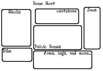Owl Pellet Bone Sort