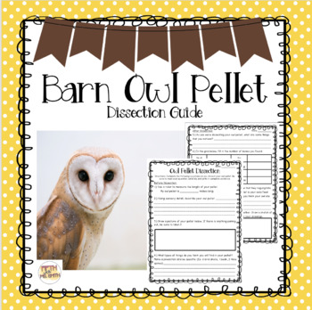 Owl Pellet Dissection Guide