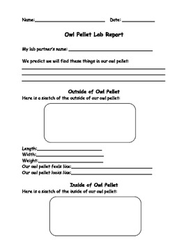 Owl Pellet Dissection Lab Report