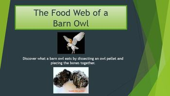 Owl Pellet Dissection Packet Lab Activity PowerPoint Ecosystem