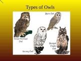 Owl Pellet Dissection Presentation (food web ecology predator)