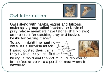 Owl Pellet Ecology Ecosystems Lab PowerPoint Presentation Lesson Plan