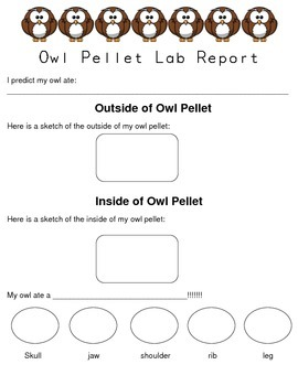 Owl Pellet Lab Report
