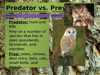 Owl Pellets: Dissection Guide with Notes
