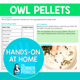 Owl Pellets {Hands-on at Home} | Distance Learning