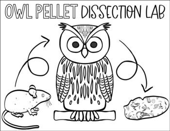 Owl Pellets Investigation
