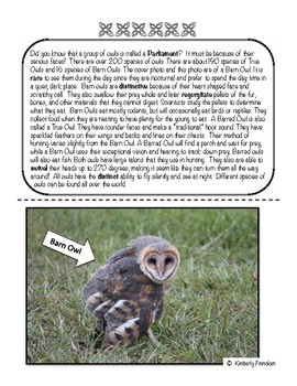 Owl: Non-Fiction Literacy Center or Close Reading Pocket Folders