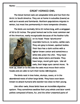 Owl Reading/ Writing Prompt