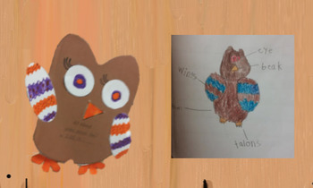 Owl Report Craftivity + Report