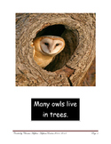 Owl Research Pictures