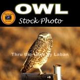 Owl Stock Photo #289
