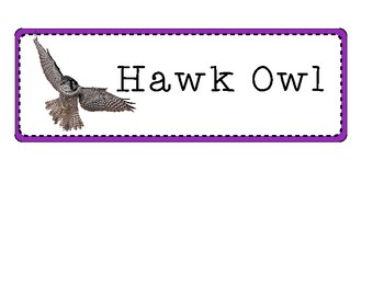 Owl-Themed Student Group Signs