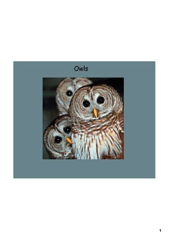 Owl Unit - Smartboard Lesson and Project Report