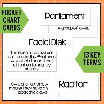 Owl Vocabulary Cards: Pocket Chart Terms