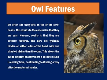 Owls PowerPoint