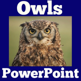 Owls Informational PowerPoint | Owls Unit PowerPoint