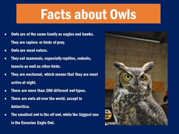 Owls Informational PowerPoint   Owls Unit PowerPoint