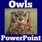 Owls | Birds | Nocturnal Animals | PowerPoint Activity | 1