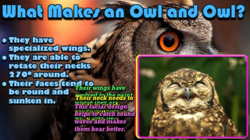 Owls - PowerPoint & Activities