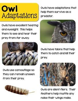 Owls Nonfiction