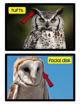 Owls - A Nonfiction Unit