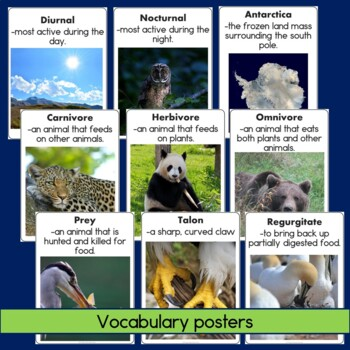 Owls Non-Fiction Guided Reading Book