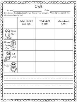 Owls - A First Grade Literacy Center