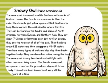 Owls: A Nonfiction Text, Activities, and Assessment