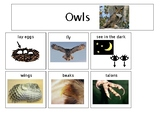 Owls Can Have Are Tree Map