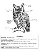 Owls Close Reading & Writing Activity