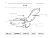 Owls Diagram - cut and paste
