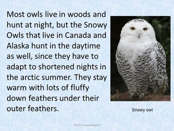 owls powerpoint fun facts about owls by happyedugator tpt
