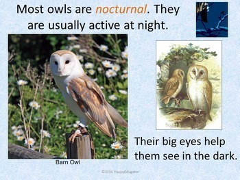 Owls PowerPoint - Fun Facts About Owls
