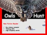 Owls Hunt