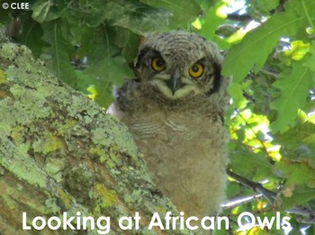 Owls - Interactive PowerPoint presentation
