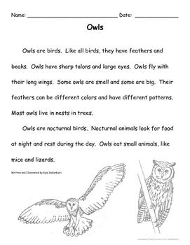 Owls (Level 1)