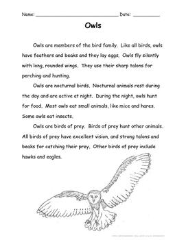 Owls (Level 2)