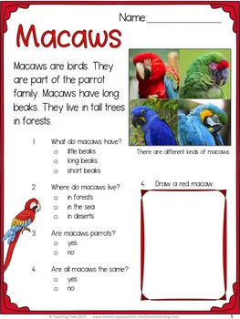 Owls Macaws FREE