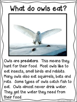 Owls Nonfiction Close Reading for Kindergarten & First Grade- Informational Text