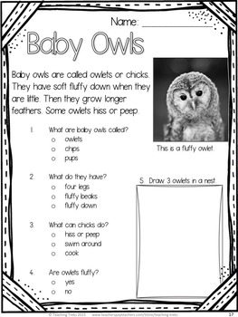 Fall Owl Activities: Owls Reading Comprehension Worksheets