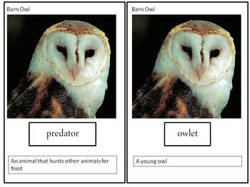 Owls Science & Literacy ~Owl Activity Unit - 2 non-fiction books, vocabulary ++