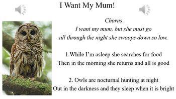 Owls - Songs for Children