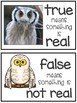 Owls - True or False